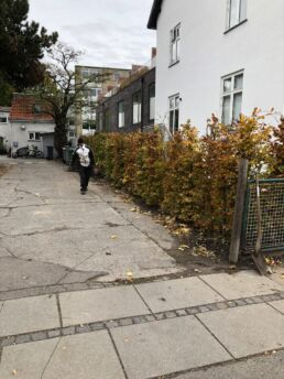 buske langs bolig